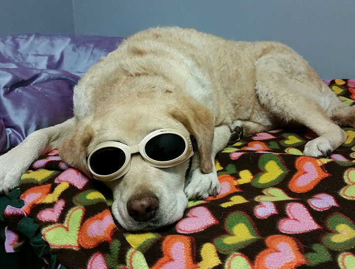 Daycare For Laser Therapy Patients